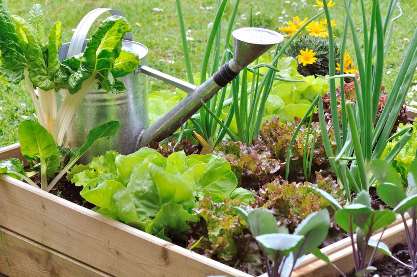 orliance studio jardinage