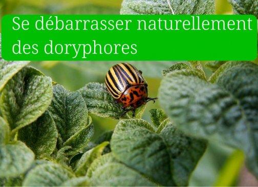 orliance rédaction web jardinage environnement