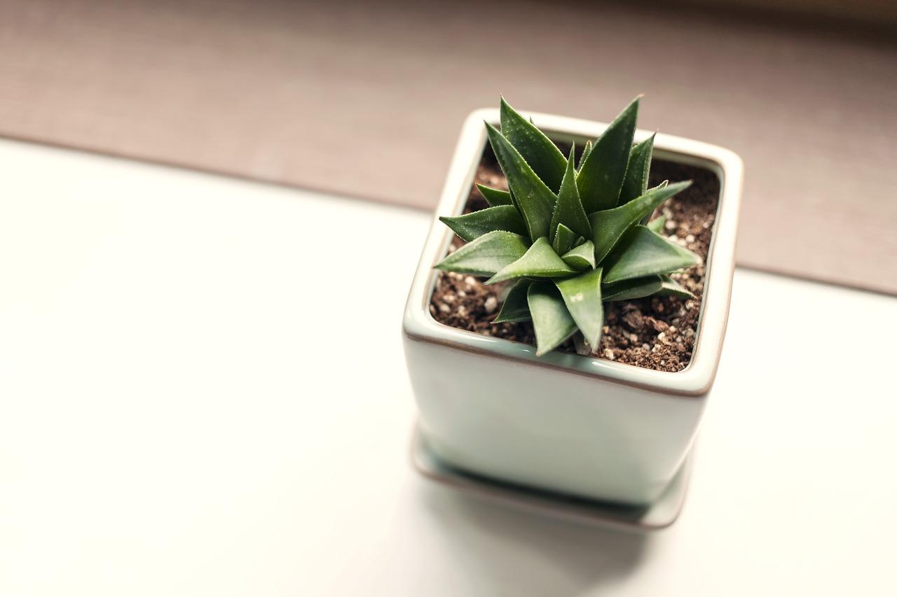 rédaction web plantes jardinage orliance-studio